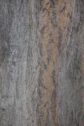 ZB RX100 - Tree Bark Texture 2 Stock Photos
