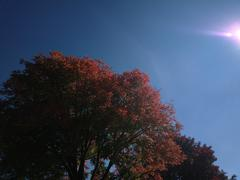 ZB Pureview - Color Trees 2 Stock Photos