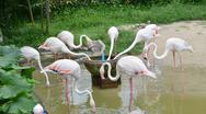 Stock Photo of flamingo