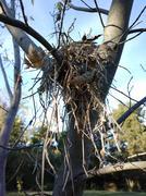 ZB Pureview - Bird's Nest Stock Photos