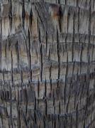 ZB Pureview - Tree Bark Texture 1 Stock Photos