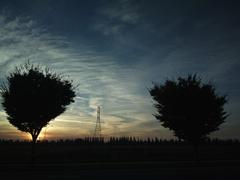 ZB Pureview - Sunset Trees - stock photo