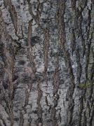 ZB Pureview - Tree Bark Textures 5 Stock Photos