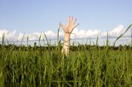 Hand in a grass Stock Photos