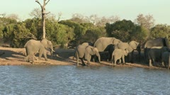 Photos of Africa,Elephants at waterhole Stock Footage