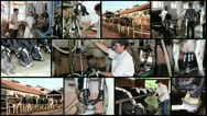 Modern Dairy Farm Stock Footage