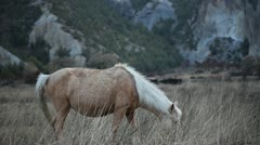 A horse grazing and taking a dump. Stock Footage