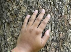 a hand, placed on the trunk - stock photo