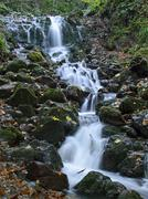 cascade in forest - stock photo