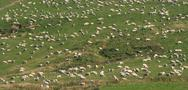Sheep on a hill Stock Photos