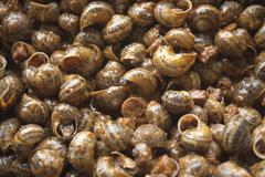 land snails in sauce, gastronomy - stock photo