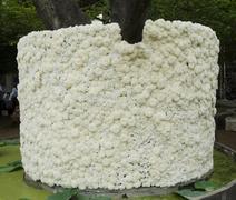 texture of white'flower - stock photo