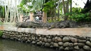 Crocodile replica Stock Footage