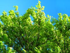 Green tree on a blue sky background Stock Photos