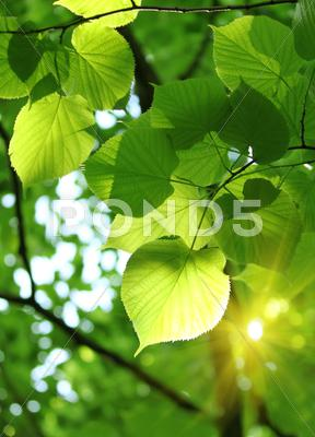 Stock photo of fresh spring foliage