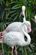 flamingo - stock photo