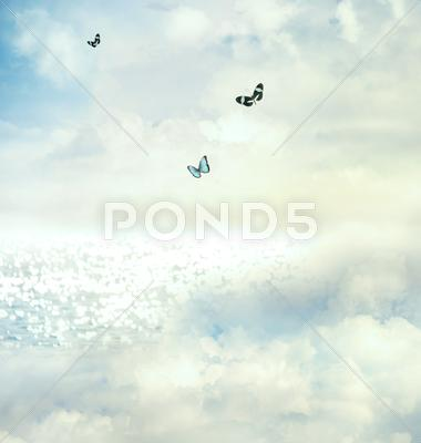 Stock photo of butterflies in the sky
