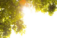 Stock Photo of green forest with sunlight
