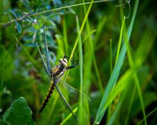 The dragonfly in a grass Stock Photos