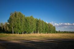 Countryside with a birch grove Stock Photos