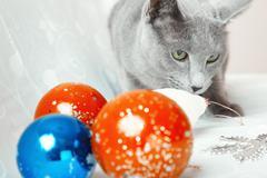 cat and christmas balls - stock photo