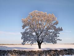 Tree with snow Stock Photos