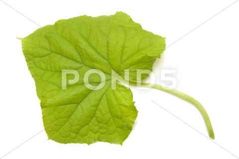 Stock photo of cucumber sheet