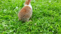 Rabbit on a green lawn Stock Footage
