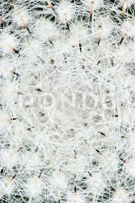 Stock photo of abstract photo of a cactus