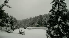 Stock Video Footage of Snow on Evergreens