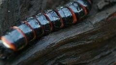 Beetle larvae Stock Footage