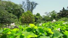 Durban's Botanic Gardens Stock Footage