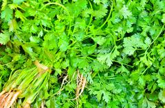 Coriander herb leaf detail Stock Photos