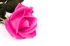 Romantic vintage rose background Stock Photos