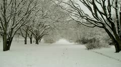 Snowy Path Flanked by Trees Stock Footage