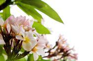 Beautiful white flower Stock Photos