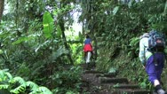 Tourists climbing up steps in Cloud Forest in Costa Rica Stock Footage