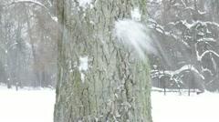 Old tree trunk bark closeup snowball hit crash throw snow winter Stock Footage