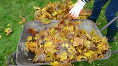 Woman hand rubber boots load barrow autumn leaves garden Stock Footage