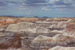 Petrified forest Stock Photos