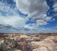 petrified forest - stock photo