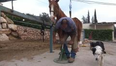 A farrier equine hoof  - shoeing horse Stock Footage