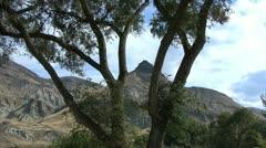 John Day sheep rock and tree Stock Footage