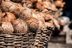 basket with coconuts - stock photo