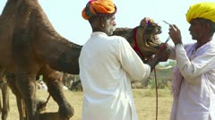 Pushkar camel fair. Stock Footage