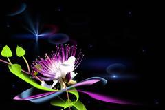 Stock Illustration of a fairy flower