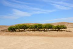 an oasis in a desert - stock photo