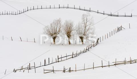 Stock photo of trees in winter time and fences