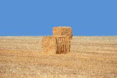 Stock Photo of haystacks