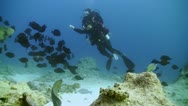 Stock Video Footage of Diver swims over camera. Red sea